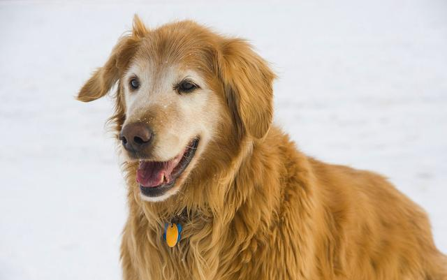关于大龄狗狗的那些冷知识