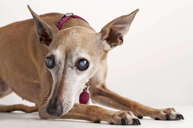 关于老龄犬的一些冷知识